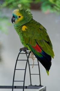 Игрушки и игровые площадки для волнистых попугайчиков