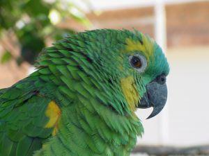 оперение и здоровье попугая
