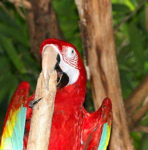 Воспитание попугая