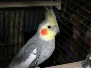Уроки словесности для попугая