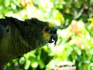 Активированный уголь для попугаев