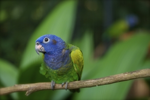 parrot-1395929-m