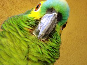 простуда у попугая