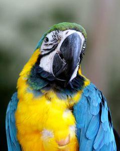 colourful-bird-4-1144034-m