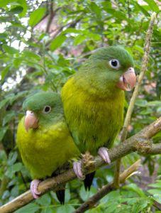 green-parrots-996767-m