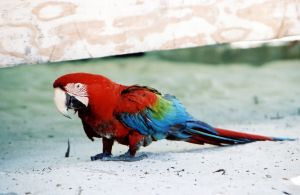 parrot-2-191957-m