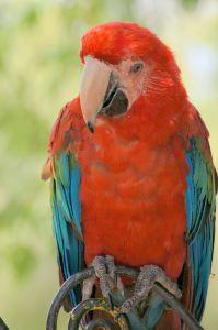 parrot-690171-m
