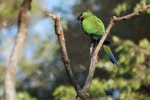 amazonian-birds-1429474-2-m
