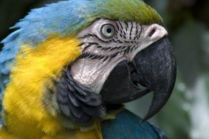 blue-macaw-958260-m