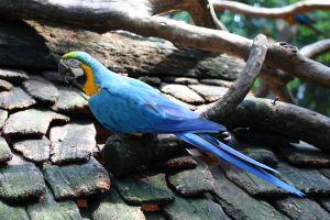 tricolor-parrot-4-1139676-m